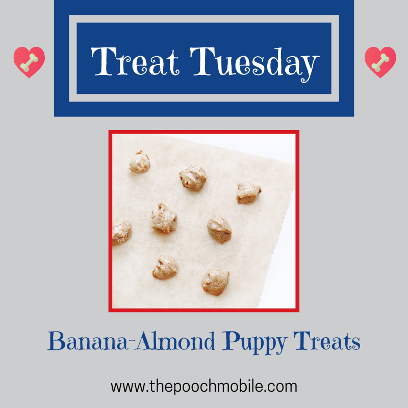 Banana-Almond Puppy Treats #TreatTuesday #ThePoochMobileDogWash #thepoochmobile #dogs #dogwash #mobilegrooming #grooming #groomingonwheels http://ow.ly/Vb1K30q3prCpic.twitter.com/Rp3RnGzDtb