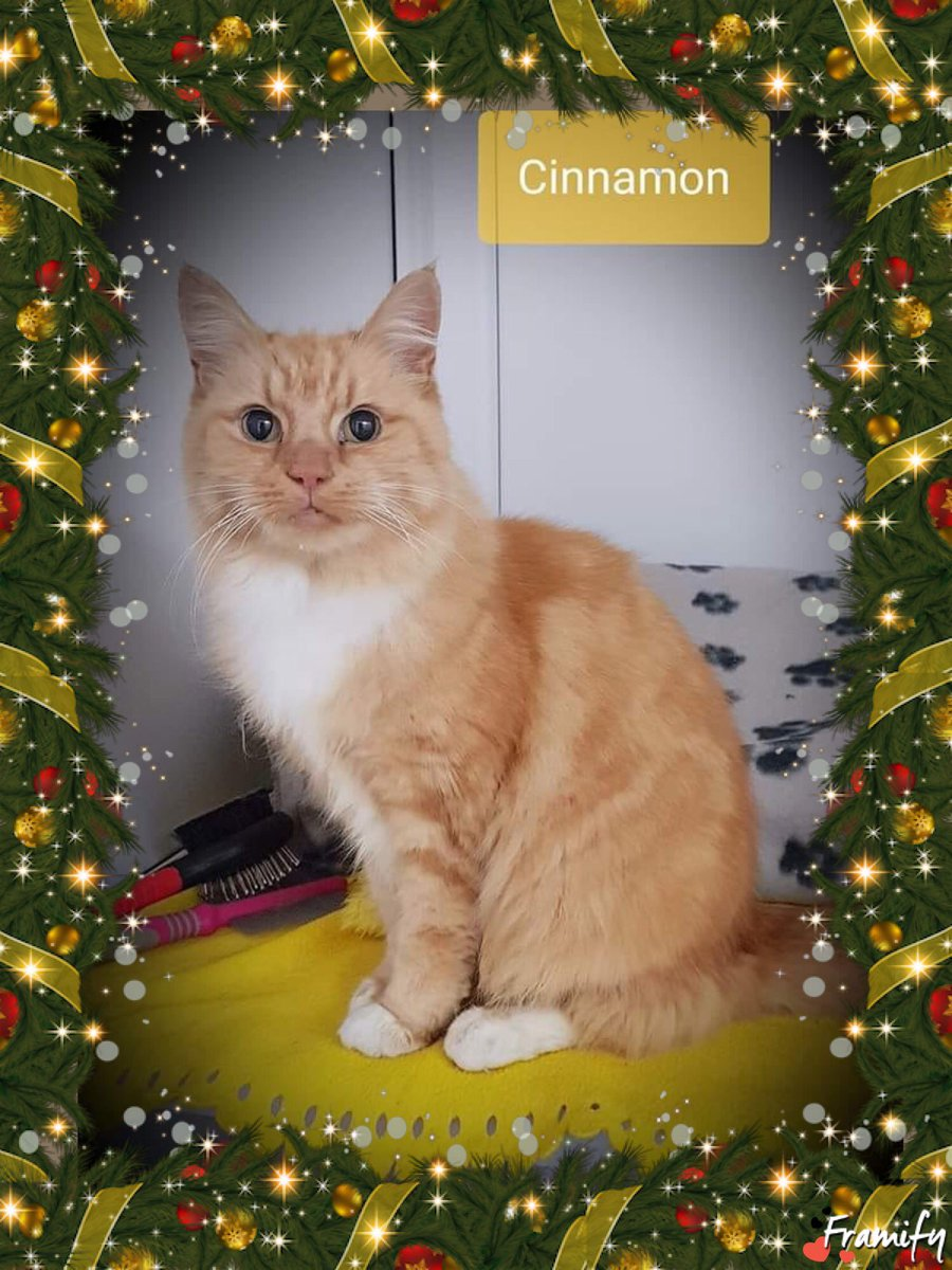 A happy update on two of our #AdventCalendar cats - Cinnamon and Spice have both found their new homes  Best wishes to both these lovely girls and their new families  #newyearnewhome #charitytuesday<br>http://pic.twitter.com/50LGJR3iRO