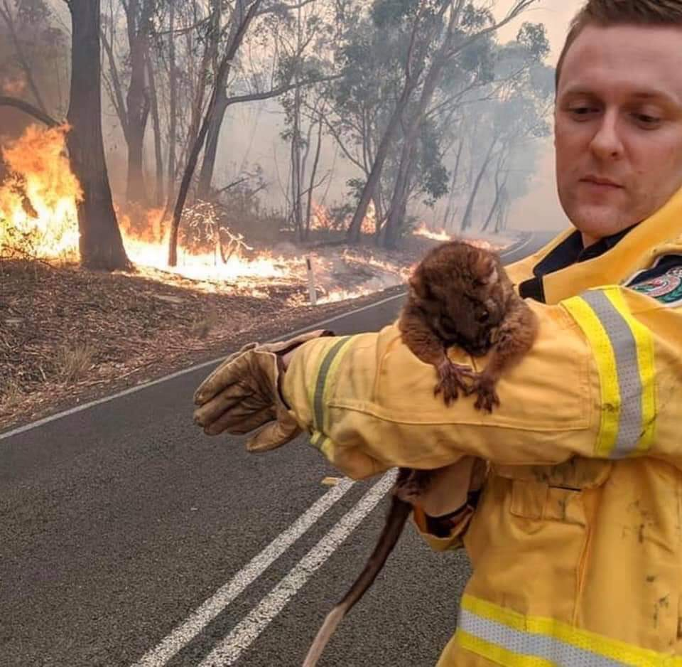 My heart is literally bleeding seeing yall like this... poor babies everything will be alright soon. May it continue to rain all over #Aussie . My neighboring country we got this together. May almighty bless the nation Amen 🙏 #AustraliaBushfires