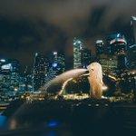 """""""根据全球的影响"""",新加坡,新加坡,开始"""