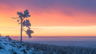 MT @OnlyInLapland: After a dark and cold solstice, we welcome the sun back to Lapland. It may not bring much warmth, but it brightens up the day in more ways than one. 📷 Markus Kiili | Lapland Material Bank #laplandfinland #aboveordinary #Finland