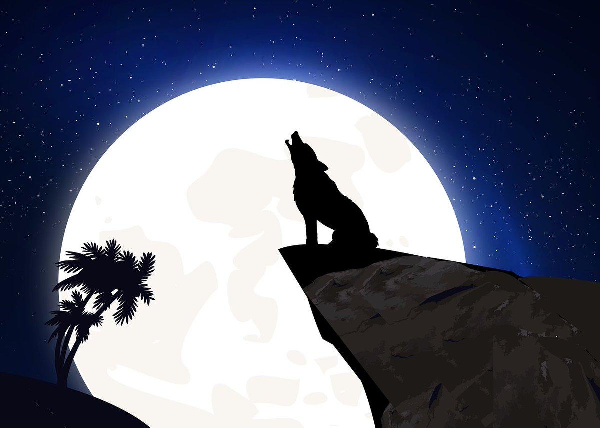 без картинка волк воет на луну сидя припущенная молоке