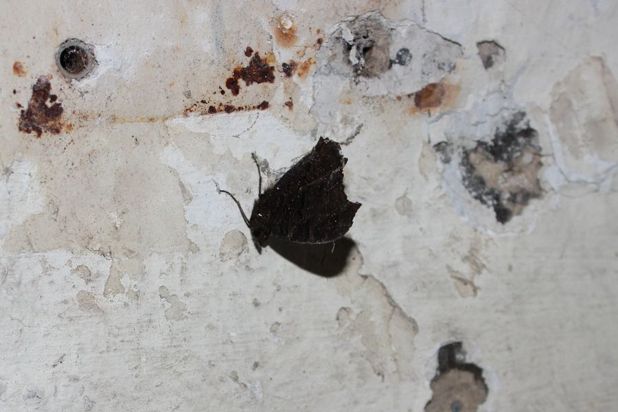 #Insektensterben
