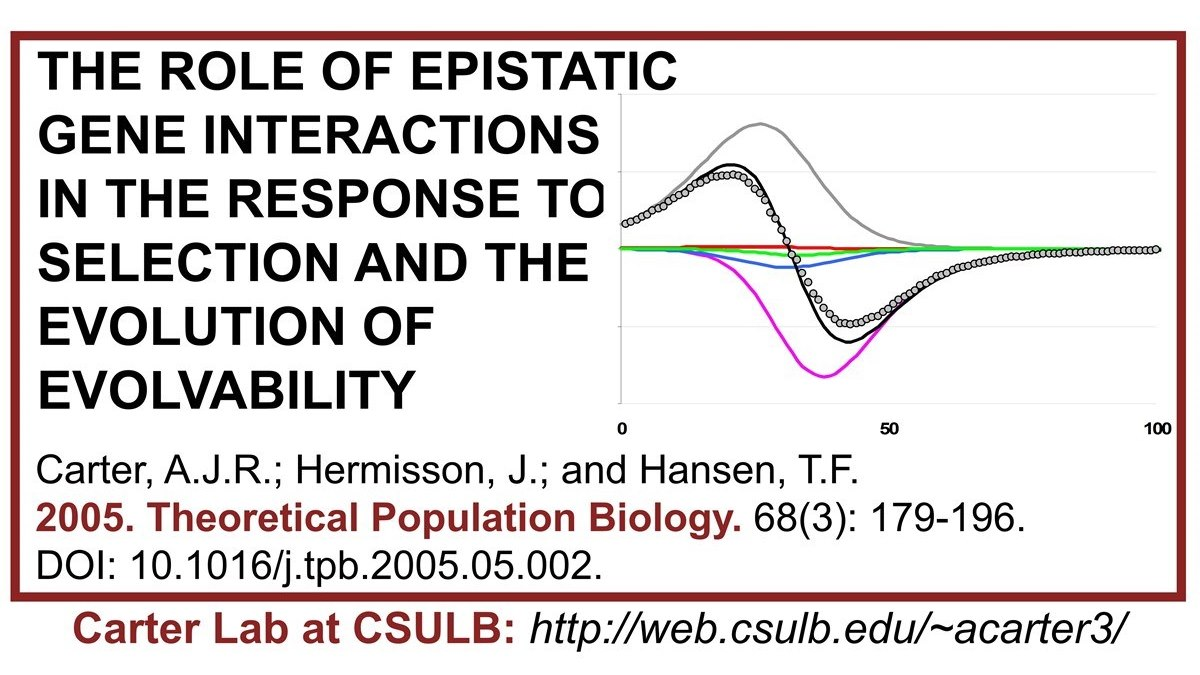 Carter Lab publication: The role of epistatic gene interactions in the response to selection and the evolution of evolvability.   #Carterlab #epistasis #theoreticalbiology #popgen #evolution #populationgenetics #evolvability #mathematicalbiology #math #TPB