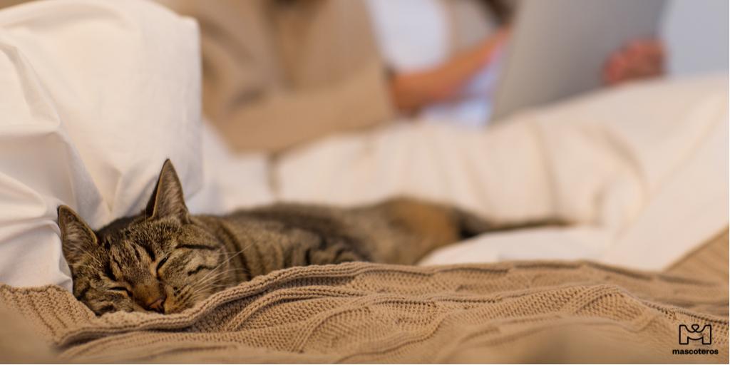 Así estamos nosotros después de tantas fiestas  . . #gato #resaca #navidad #rutina #vueltaalarutina #amorgatuno #cat #christmas #friends #fitness #gatos #cats #catsofinstagram #domingo #love #hangover #seacabolobueno #catstagram #party #regalos #instagood #instacatpic.twitter.com/BDk72fqqJd