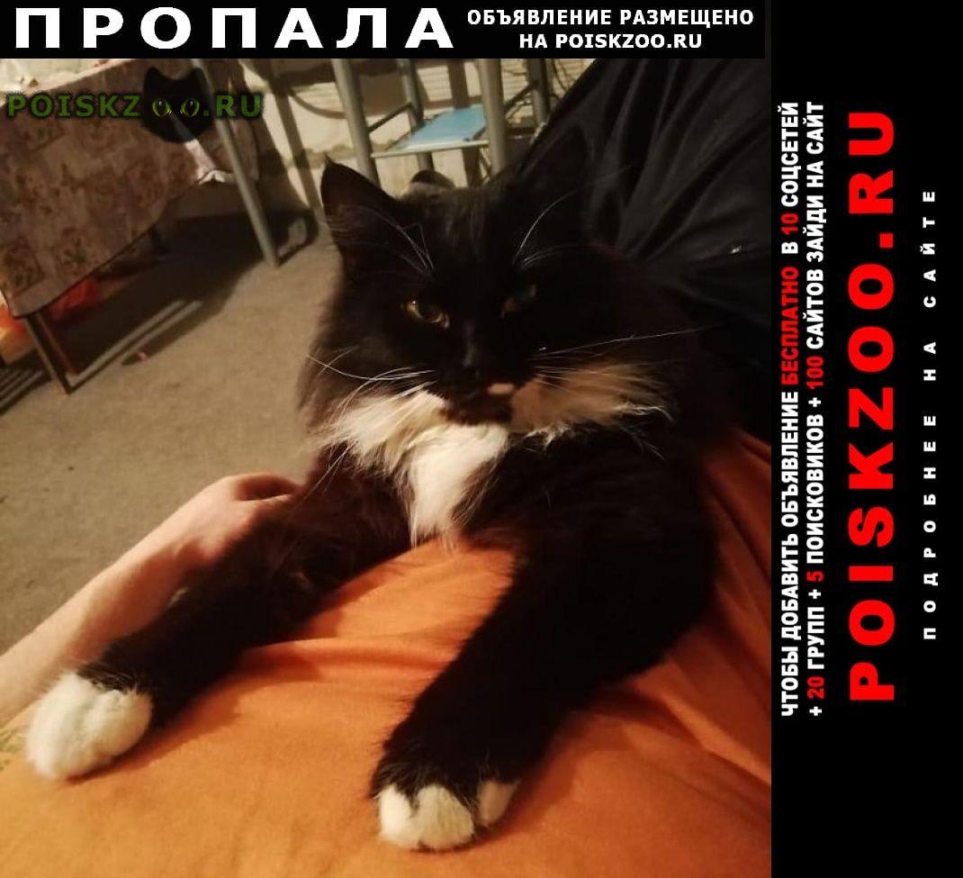 кошки в подарок ростов на дону фотографии вибратором закрылась спальне