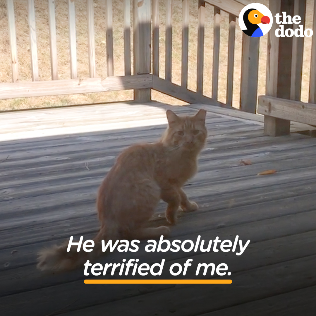 Watch this guy spend a year trying to get the stray cat in his yard to come inside ❤️