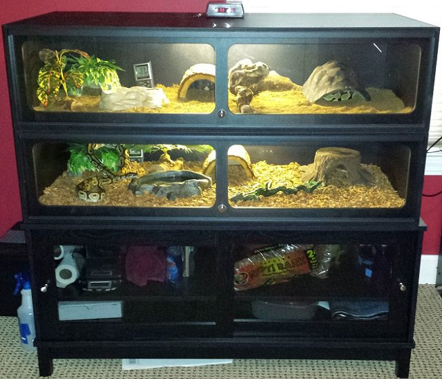 Sandi Morris Oly On Twitter I Know Most Of You Don T Have Reptiles But I Want To Share When You Buy A Reptile Habitat Avoid Glass Tanks W Screen Lids That S Carolina custom cages terrarium, large 36lx18dx18h; reptile habitat avoid glass tanks