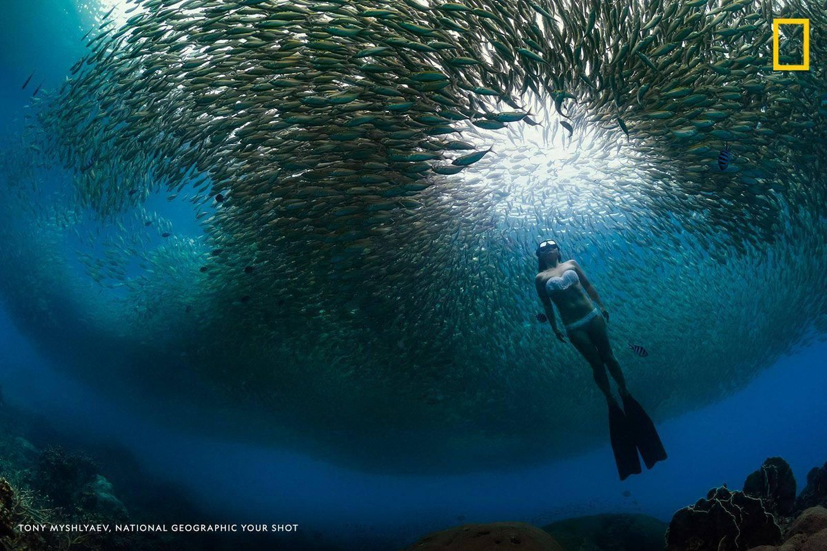 A densely-packed school of fish parts for a passing free diver off the coast of Thailand in this mesmerizing scene captured by Your Shot photographer Tony Myshlyaev<br>http://pic.twitter.com/dZ7WYIIOCB