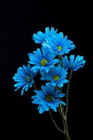 flowers of evening for you   sweet love                                 <br>http://pic.twitter.com/hz6iKhrYHG
