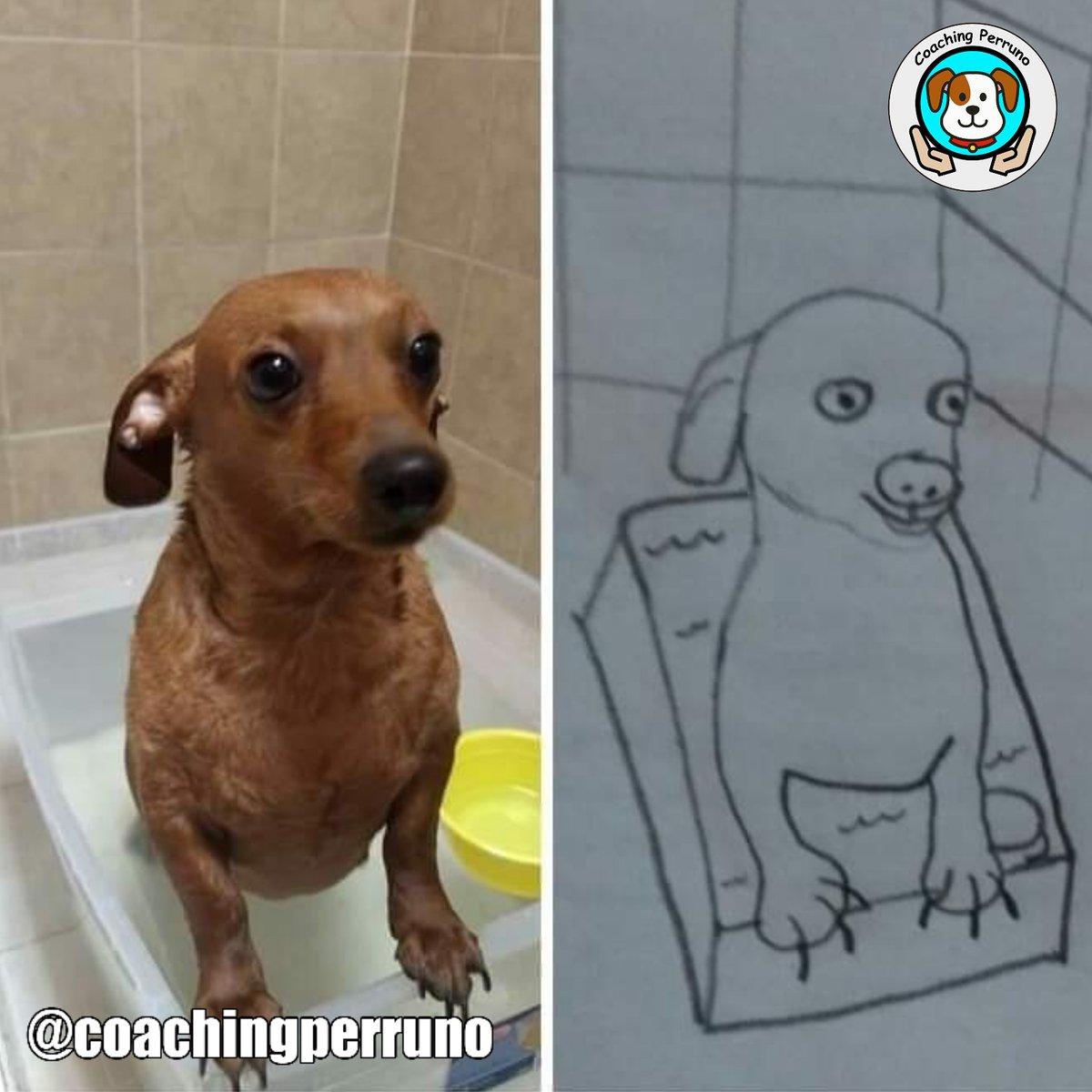 El dibujo es mi pasión #perros #dogs #mascotas #petsoftheday #petstagram #dogstagram #funnypets #pets #ilovedogs#petslovers #funnydogs #dogsloverspic.twitter.com/bSwAGlcJ4n