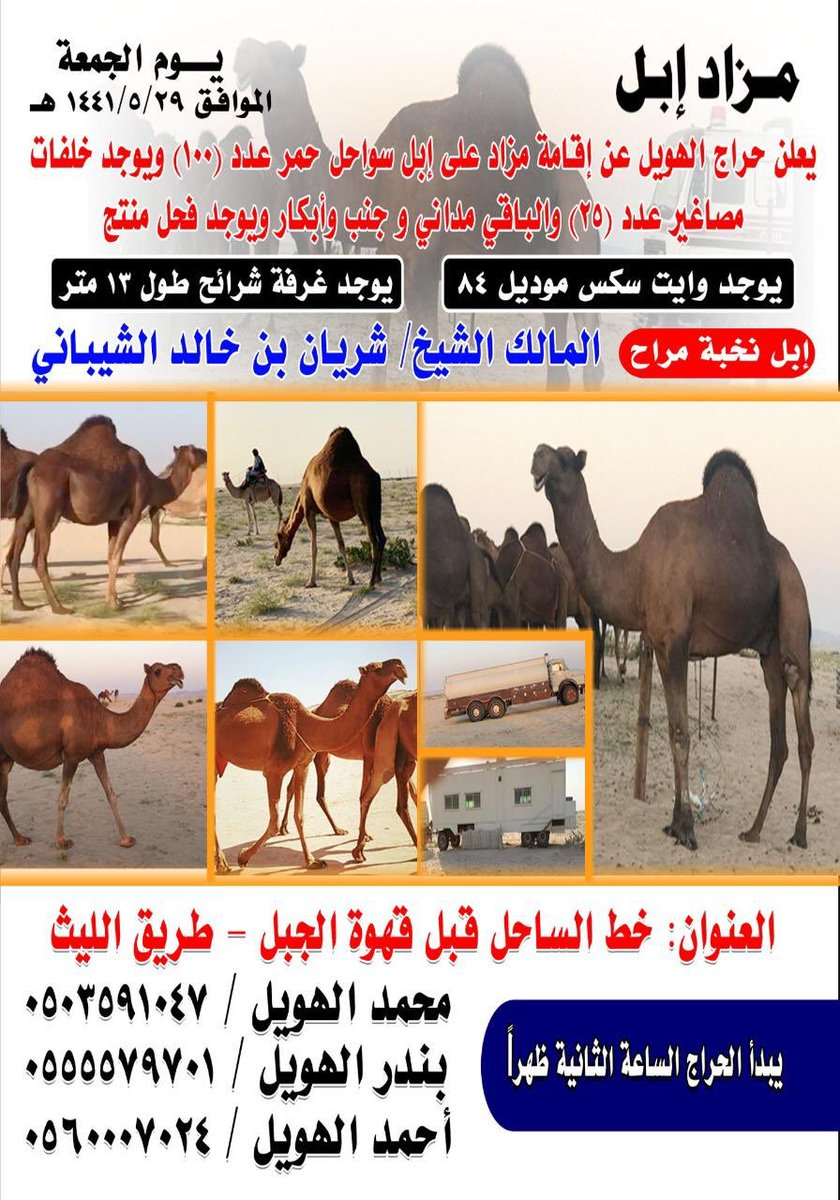 Uzivatel الج م وم اخبار وعلوم Na Twitteru مزاد الابل يوم الجمعه ٢٩ ٥ ١٤٤١هجري