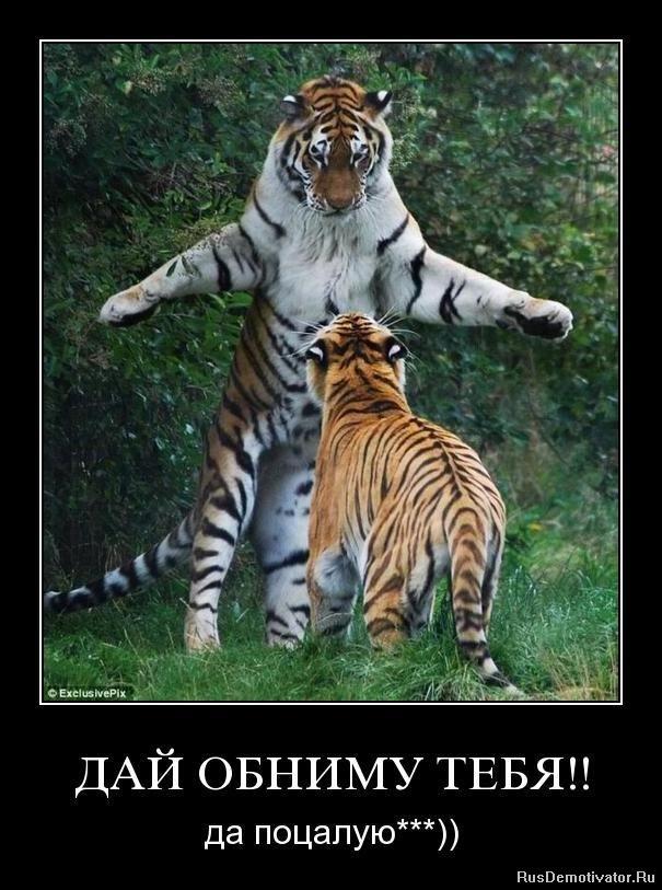 Тигр с надписями картинки