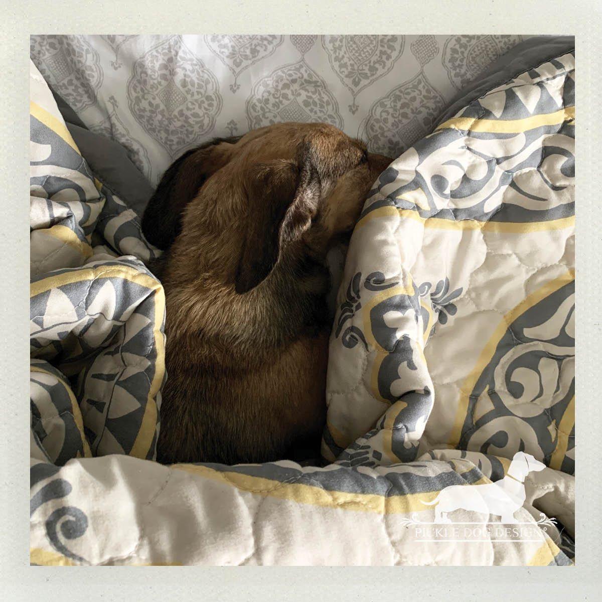 """It's been a long week."" Says we in the middle of Tuesday. #tuesdaymood #tuesdayfeeling #tuckedin #snuggledup #napping #dognap #letsleepingdogslie #sleepydogs #tiredpup #dachshund #doxie #doglife #dachshundoftheday #etsyseller #etsyshop #smallbiz #smallbusiness #shopsmallpic.twitter.com/baioRQrctQ"