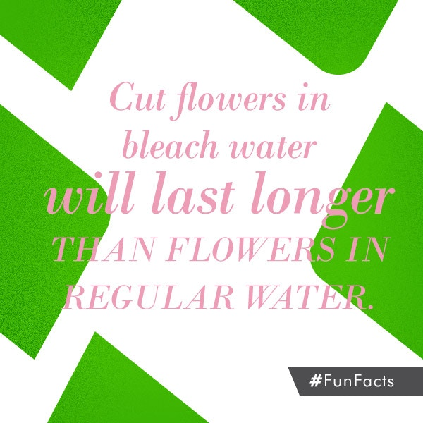 How to save your cut flowers a couple extra hours ;) #FunFacts pic.twitter.com/IGFRUnndVg