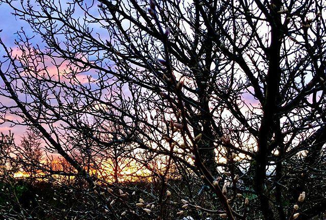 The Edited Eye #22: Fire Sky. #trees #sunset #sky #connecticut #ct #newengland #newlondon #winter #newenglandphotography #iphonephotography #photoaday #photoadayjanuary #photoadayjan https://ift.tt/2GbGnR1