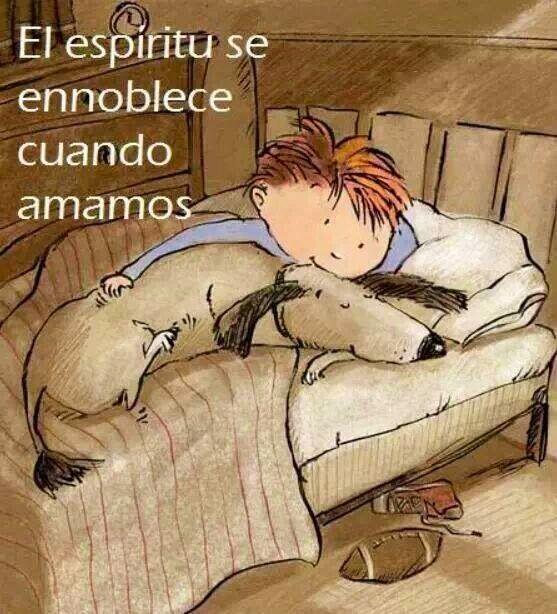 #BuenasNoches A TODOS LOS QUE AMAN,DEFIENDEN,RESPETAN Y AYUDAN A LOS ANIMALES!!pic.twitter.com/TQqN0XKzzl