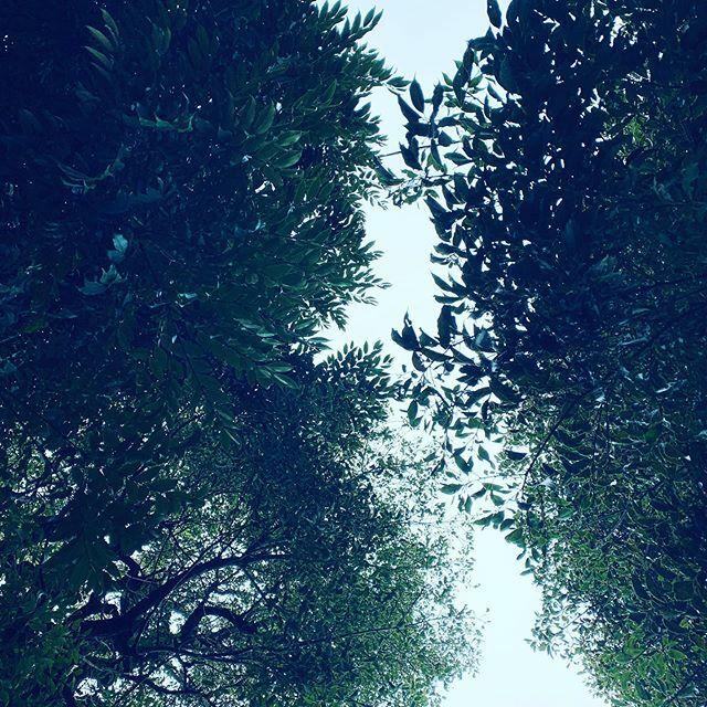 変な天気だなぁ。これが日曜まで続くんだって? #sky #イマソラ #cloud #tree #green https://ift.tt/38uREbs