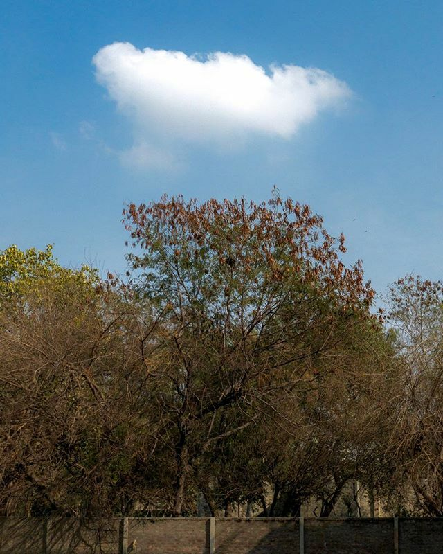 The Copycat Cloud....#trees #nature #naturephotography #tree #photography #autumn #forest #landscape #sky #green #naturelovers #photooftheday #fall #clouds #travel #sunset #love #ig #leaves #beautiful #mountains #art #landscapephotography #winter #p… https://ift.tt/2G8YSpr