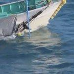 Image for the Tweet beginning: 20/1/2020. 尾びれを縛られて溺死させられるイルカたち。和歌山県太地というイルカに残酷な町は毎日何十匹、毎月何百匹ものイルカを殺すことになんら罪悪感を持たず水族館に引き渡し、虐待虐殺をさも日本の伝統だと正当化し続けています。日本人の恥。😡😡😡😢💔💔🐬🐬🐬🐬#イルカ .@Dolphin_Project