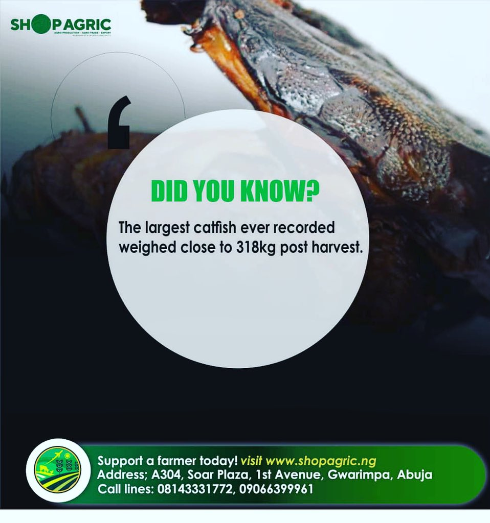Agro quote Wednesday: One of the largest catfish ever recorded weighed in at nearly 700 pounds, approximately 318kg while the smallest species of catfish reach just one centimeter in length. #agriculture #ILikeBernie #nigeria #AbujaTwitterCommunity #farming #DSTV #investing