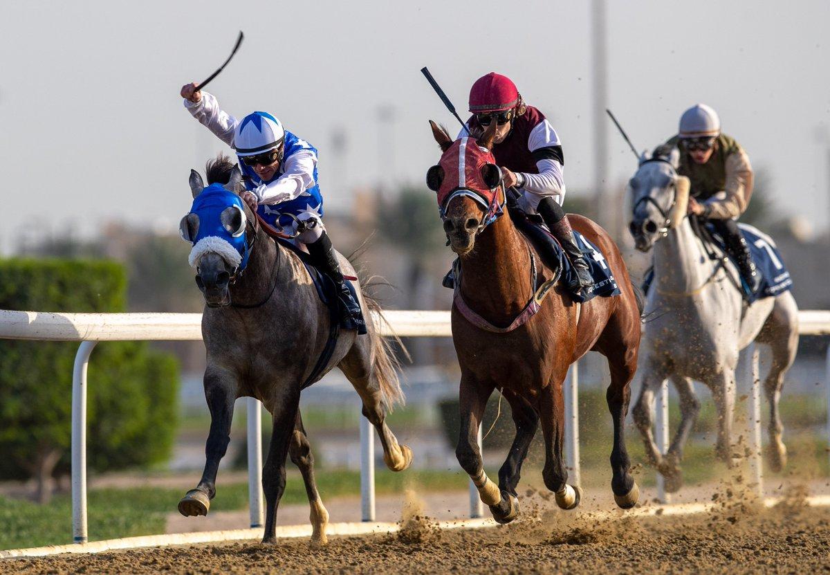 Abu Fass Stud's SAA'D (QA) and doubles his tally in a 1800m Local Purebred Arabian Novice Plate on dirt at QREC Al Rayyan Park. The Mohammed Riyaz Ibrahim Kasim-trained 6YO bay son of BURNING SAND was ridden by #Jockey Marco Casamento #DohaQatar #الدوحة_قطر #q_rec #QRECpic.twitter.com/tN0IDillao