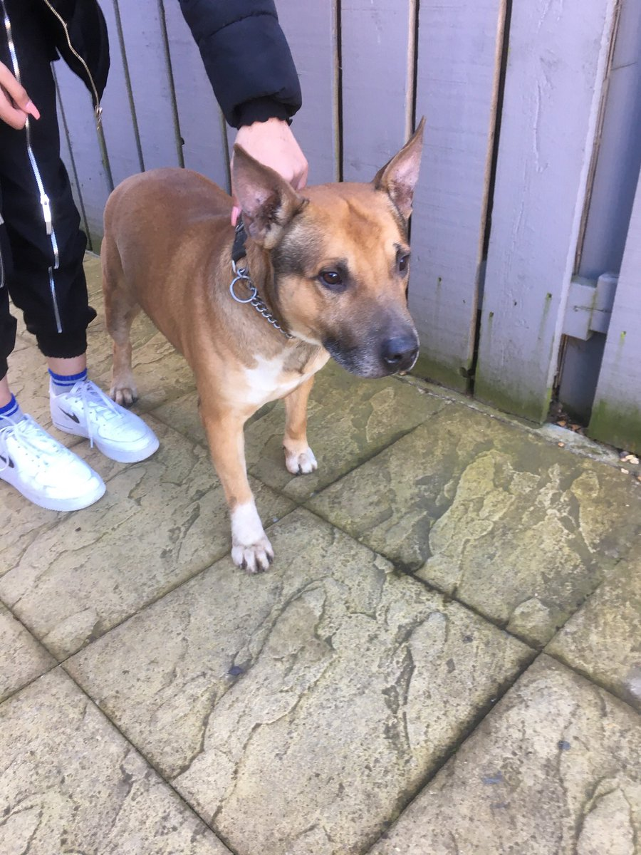 Hi we found this beauty yesterday outside Bedford Hospital South Wing. The lovely guy who caught him tried to find owner but dog warden has taken to Forest Lodge Kennels he is chipped but hasn't found his family yet. Please give a #RT to find them friendly boy. Collar no tag xx<br>http://pic.twitter.com/BWKoOMz7vf