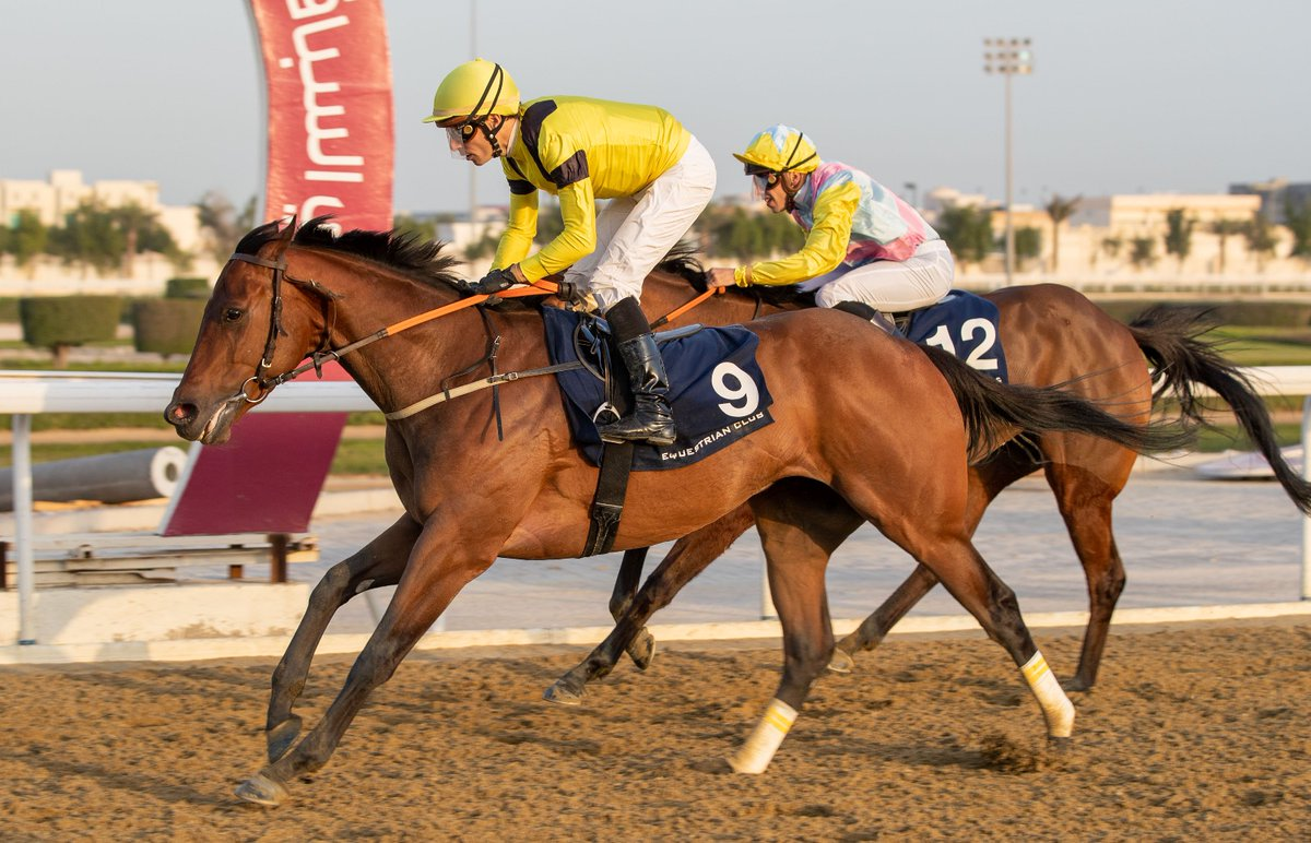 The Ibrahim Saeed Al Malki-owned & trained HESSDALEN (GB) gets off the mark in 5th attempt winning a 1900m Thoroughbred Maiden Plate (Class 6) on dirt at #QREC Al Rayyan Park. The 4YO bay son of SEA THE STARS (IRE) was guided by #Jockey Ronan Thomas #DohaQatar #الدوحة_قطر #q_recpic.twitter.com/CAtzfd5Mwt