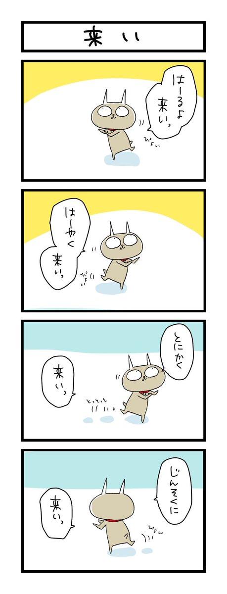 【夜の4コマ部屋】来い / サチコと神ねこ様 第1242回 / wako先生 – Pouch[ポーチ]