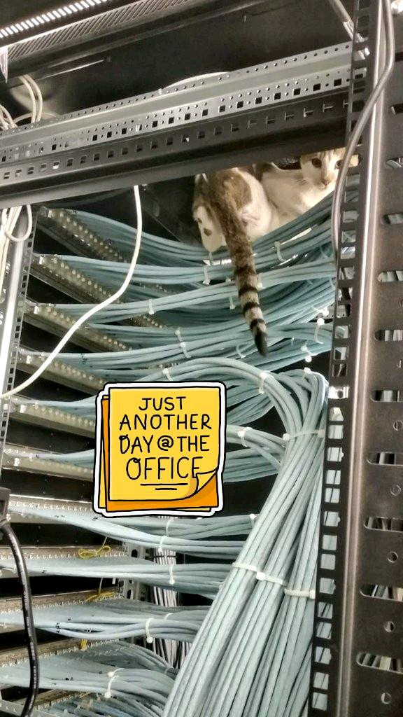 See that???  Yes that's a Top-of-the-Rack CAT!!!!! she came all the way from MATRIX . #Cat  #server #technologytrends #TechnologyNews #technologies #technosportpic.twitter.com/ChKWn5rhwg