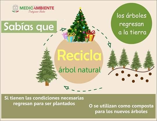"""¿Sabías que tu #ÁrbolDeNavidad puede dar más vida a otros árboles  Llévalo a nuestro centro de acopio #Ecoparque Centenario """"Toma de Zacatecas"""" para que sea aprovechado de manera sostenible.  #ReciclaTuÁrbol pic.twitter.com/IxptWDT8AQ"""