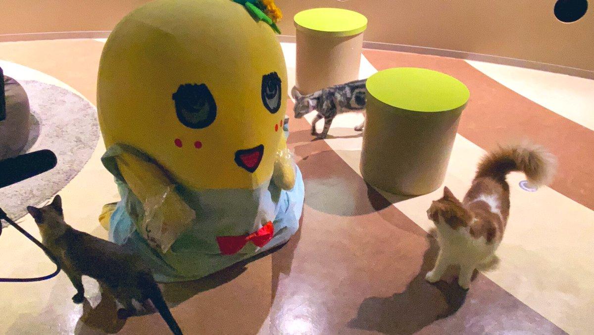 みんなー今日も一日お疲れ様なっしー♪ヾ(。゜▽゜)ノ動物に囲まれると幸せ感が増すなっしなー♪猫とポテチが有れば生きていけるなっしー♪  飼ったら名前なんにしようかなー レイワキャッツアイなんていけてるなっしー♪ 明日もみんな幸せが… https://t.co/CFnRc4T91J