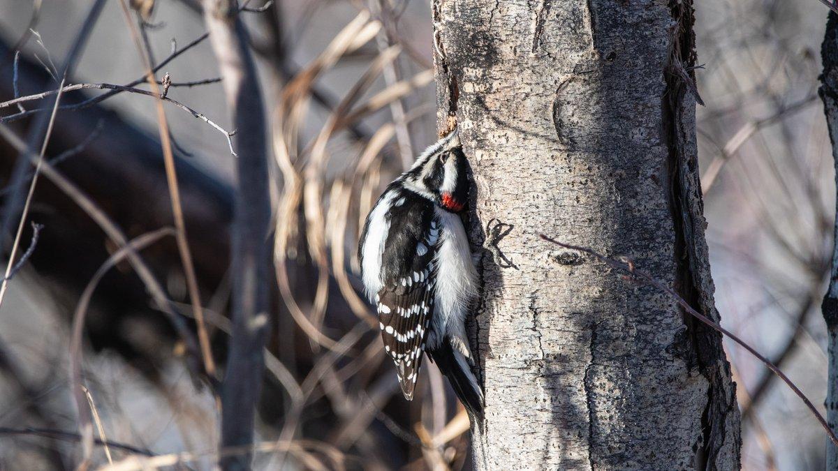 Getting closer...closer...just a little bit more.. #wildlifewednesday <br>http://pic.twitter.com/ISjD33mt5A