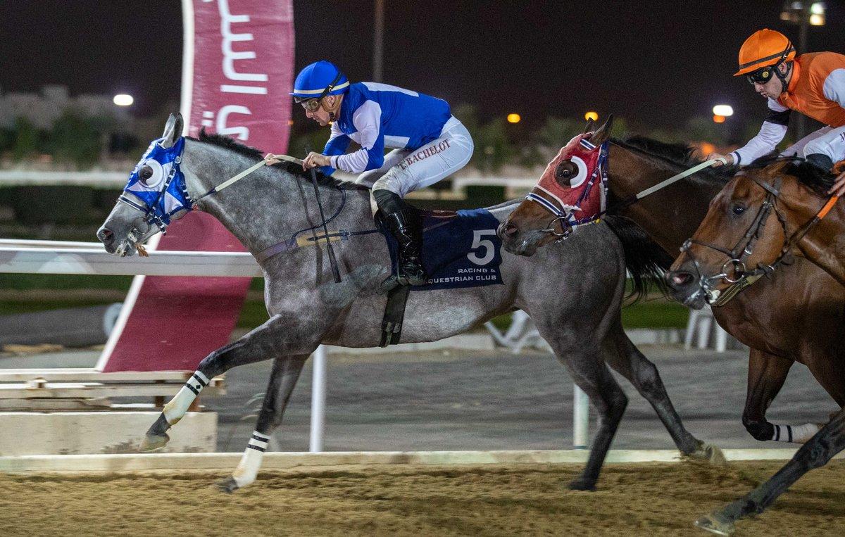 Sheail bin Khalifa Al Kuwari's GANGLAND (GB) confirms he is back to form scoring 5th win in a 6f TB Handicap (70-90/Class 3) at Al Rayyan Park. The Gassim Mohammad Ghazali-trained 5YO grey son of Lethal Force (IRE) was ridden by #Jockey Theo Bachelot #DohaQatar #الدوحة_قطر #q_recpic.twitter.com/iUCpHFEJ9T