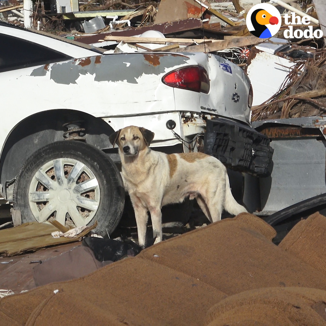 Dog found in hurricane rubble has the best reaction to his new life ❤️