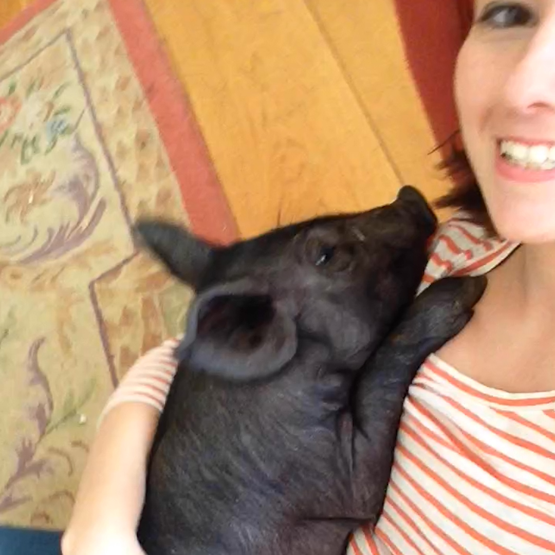 Watch this pig 'sit' just like a dog 💞
