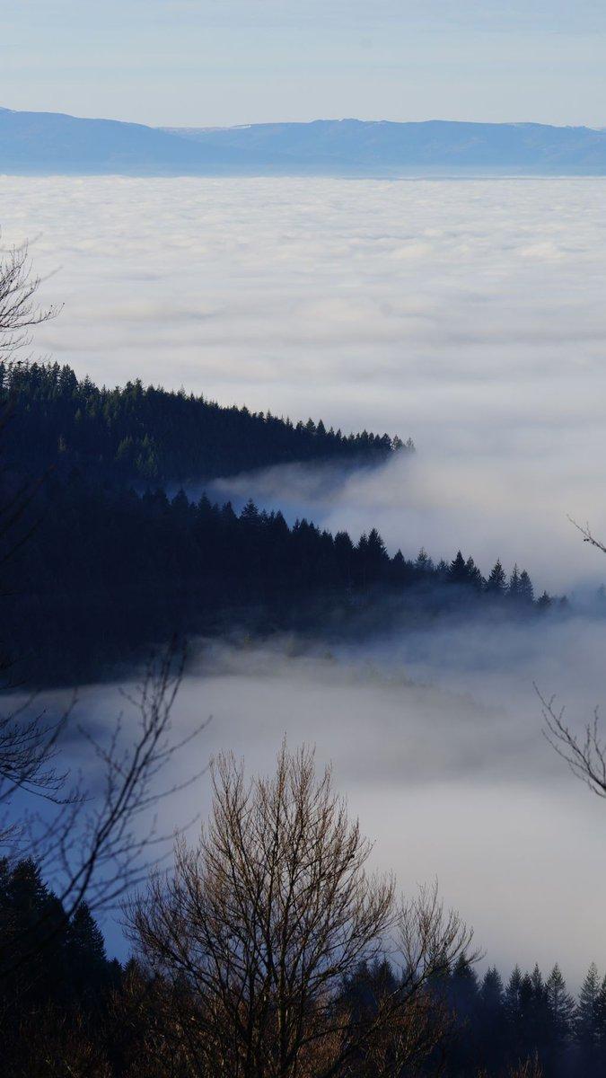 Cloudy trees #blackforest #home #heimat #wolken #clouds #tree #baum #white #weiß #watte #wadding #winter #sun #sonne #germanalphas #reisen #sony #alpha99 #a99 #sal70400II #nofilter @sony @sonyalpha @sonydeutschlandpic.twitter.com/Bdx1rgxb2P