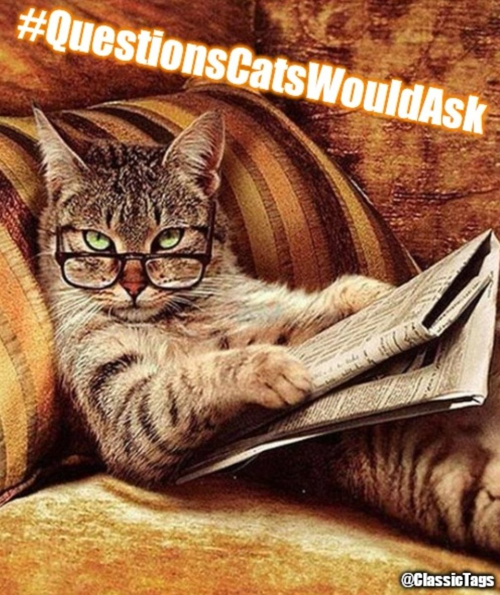 Let's Play 👇  #QuestionsCatsWouldAsk 🐱  w/ @crazygal1892 @jillaaahhhh @RiepTide1999 @Superbokka & @Classic_George 👍   Part of The @HashtagRoundup  Powered By @TheHashtagGame   #ClassicTags #Meow 🐯