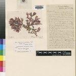 Image for the Tweet beginning: This red algae specimen found