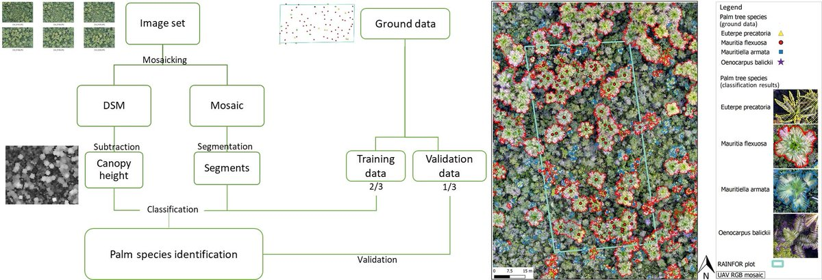 Identifying and Quantifying the Abundance of Economically Important #Palms in #Tropical Moist #Forest Using #UAV Imagery by Ximena Tagle Casapia, Lourdes Falen et al.  https://www. mdpi.com/2072-4292/12/1 /9/htm   …  #remotesensing<br>http://pic.twitter.com/yLYL8S4wW6
