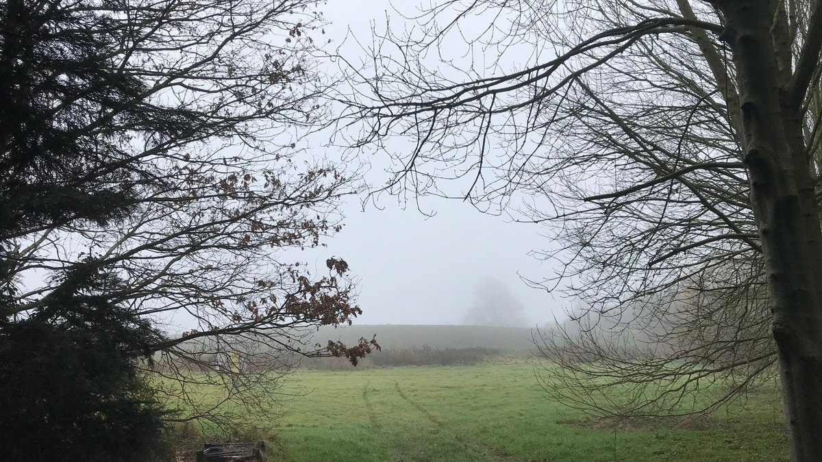 test Twitter Media - Fog & Nature: the best combination ☁️ #Dublin https://t.co/ufClAAI8Xn