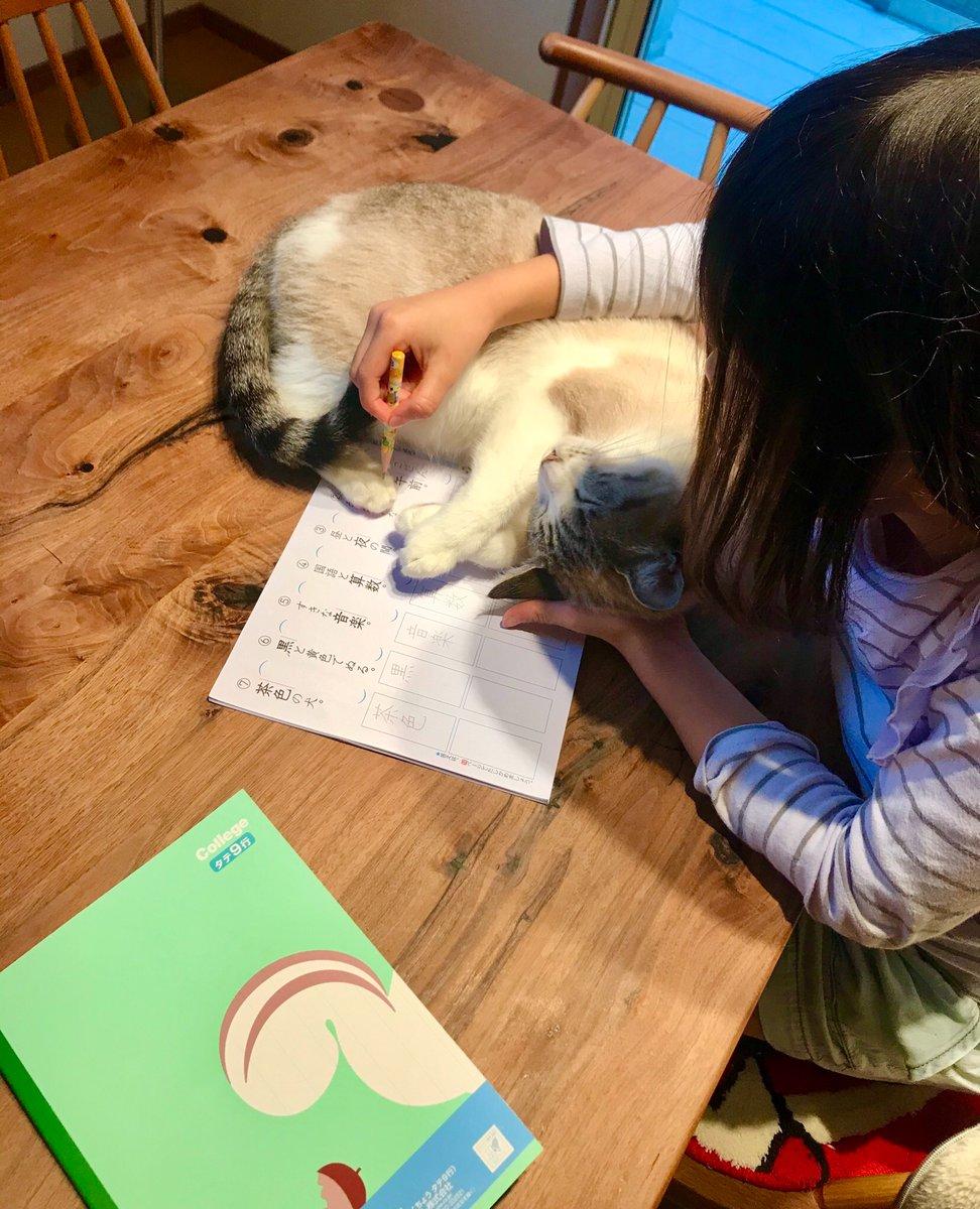 娘が宿題を嫌だと言った事がないのは、猫達のおかげだと思う