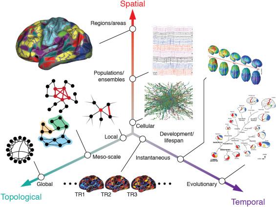Las redes del #cerebro están organizadas en múltiples escalas espacio-temporales. #neurociencia #neuropsicologia    @sciencedirect