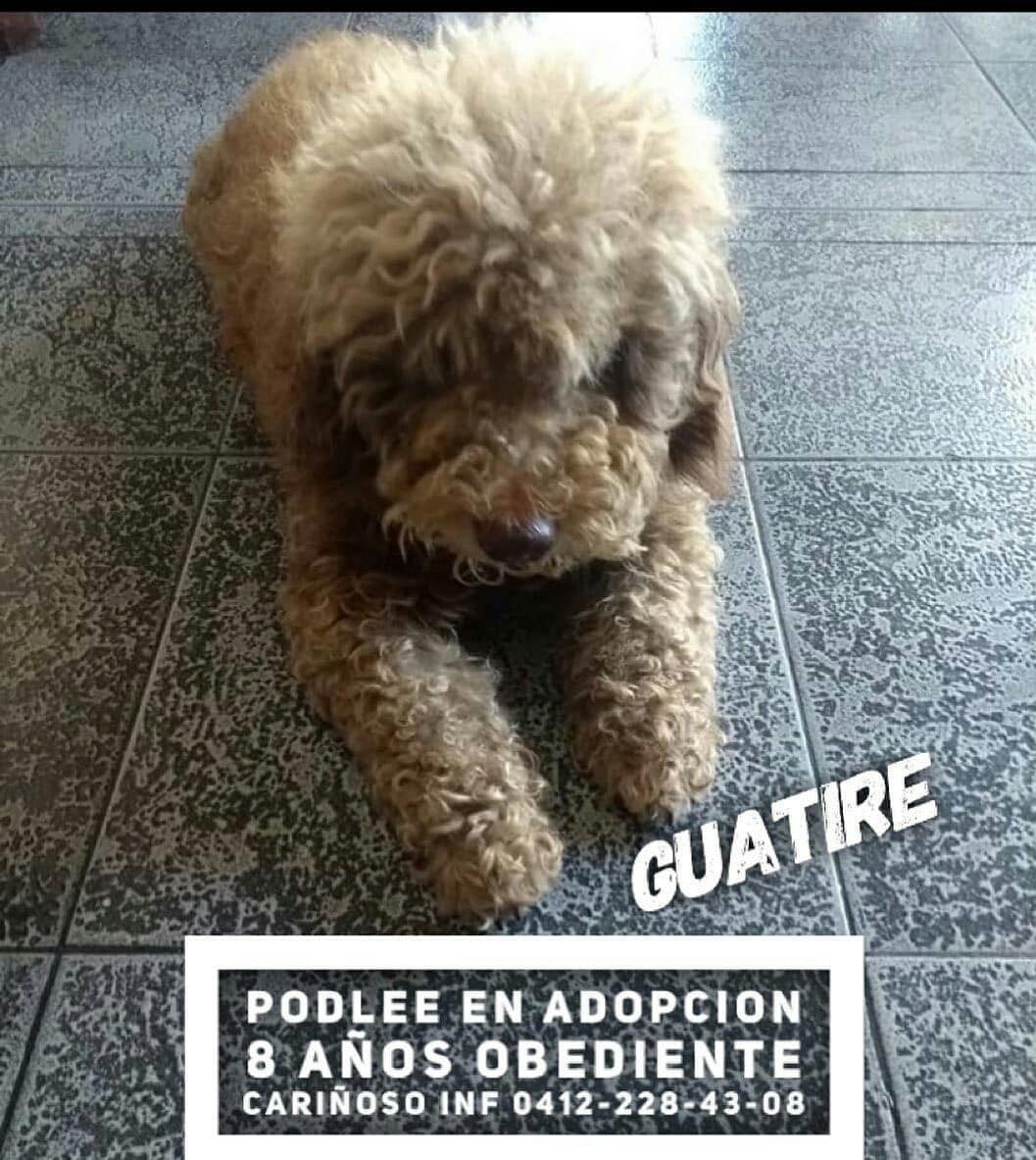 Sharing from Reposta Difundir...Caracas...este angelito necesita un hogar Reposted from @perritosdelacallev <br>http://pic.twitter.com/efczsyNv1Q