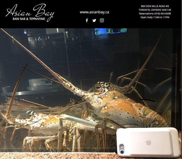 #directimport #lobster #seafoodtoronto #toronto #seafoodtime #cateringtoronto #lobster#yyz#qualityseafood #food #instalobster #instaseafood #seafoodlover #seafoodporn #freshfromthesea #torontocanada #GTA #wholesale #retail #torontorestaurant #seafoodlovers #foodservice #chef https://twitter.com/asianbay_ca/status/1216072361583104001…