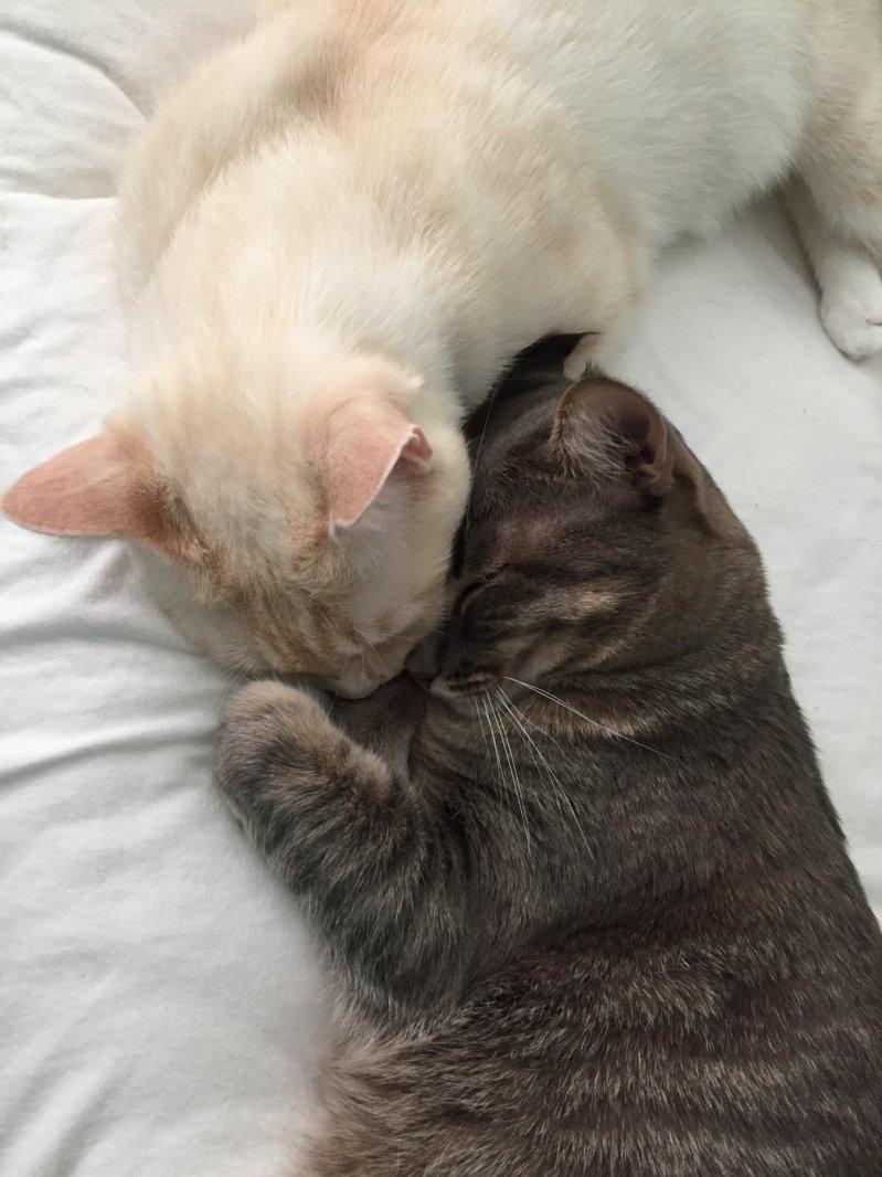 Любимый сладко спит картинки