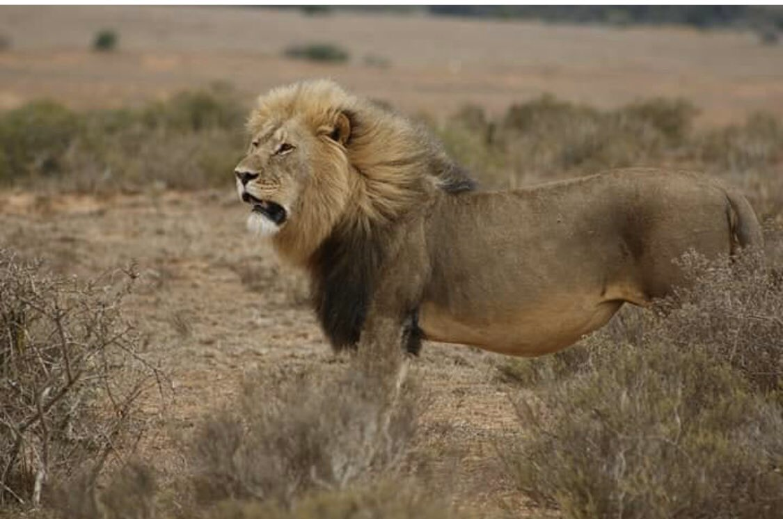 What beautiful animals   Don't forget JANUARY SALE IS ON NOW  Visit http://amanzitravel.co.uk   For more info pic.twitter.com/KvWEJrKdHx