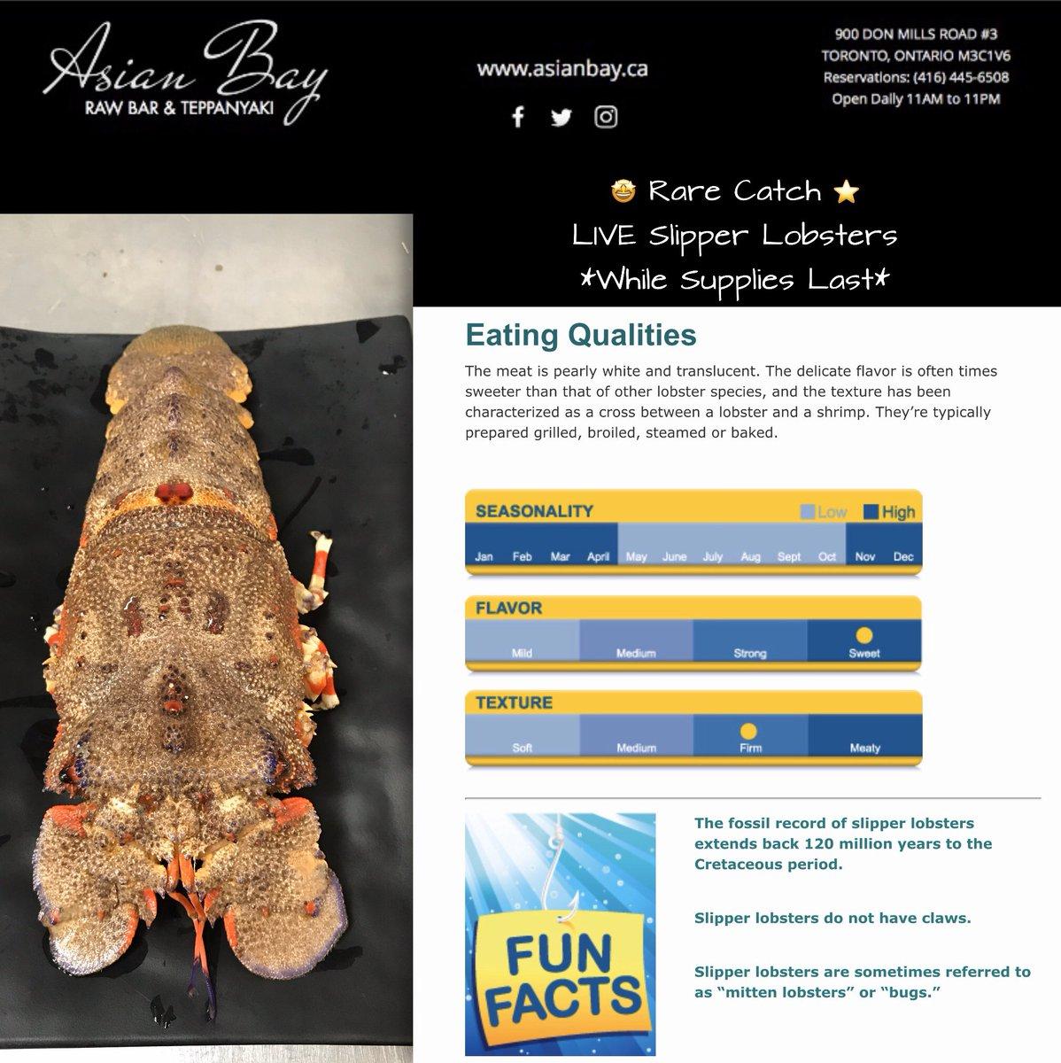 #directimport #lobster #seafoodtoronto #shellfishtoronto #toronto #seafoodtime #cateringtoronto #lobster#yyz#food #instalobster #instaseafood #seafoodlover #seafoodporn #freshfromthesea #torontocanada #GTA #wholesale #retail #torontorestaurant #seafoodlovers #foodservice #chef https://twitter.com/asianbay_ca/status/1216123926046289920…