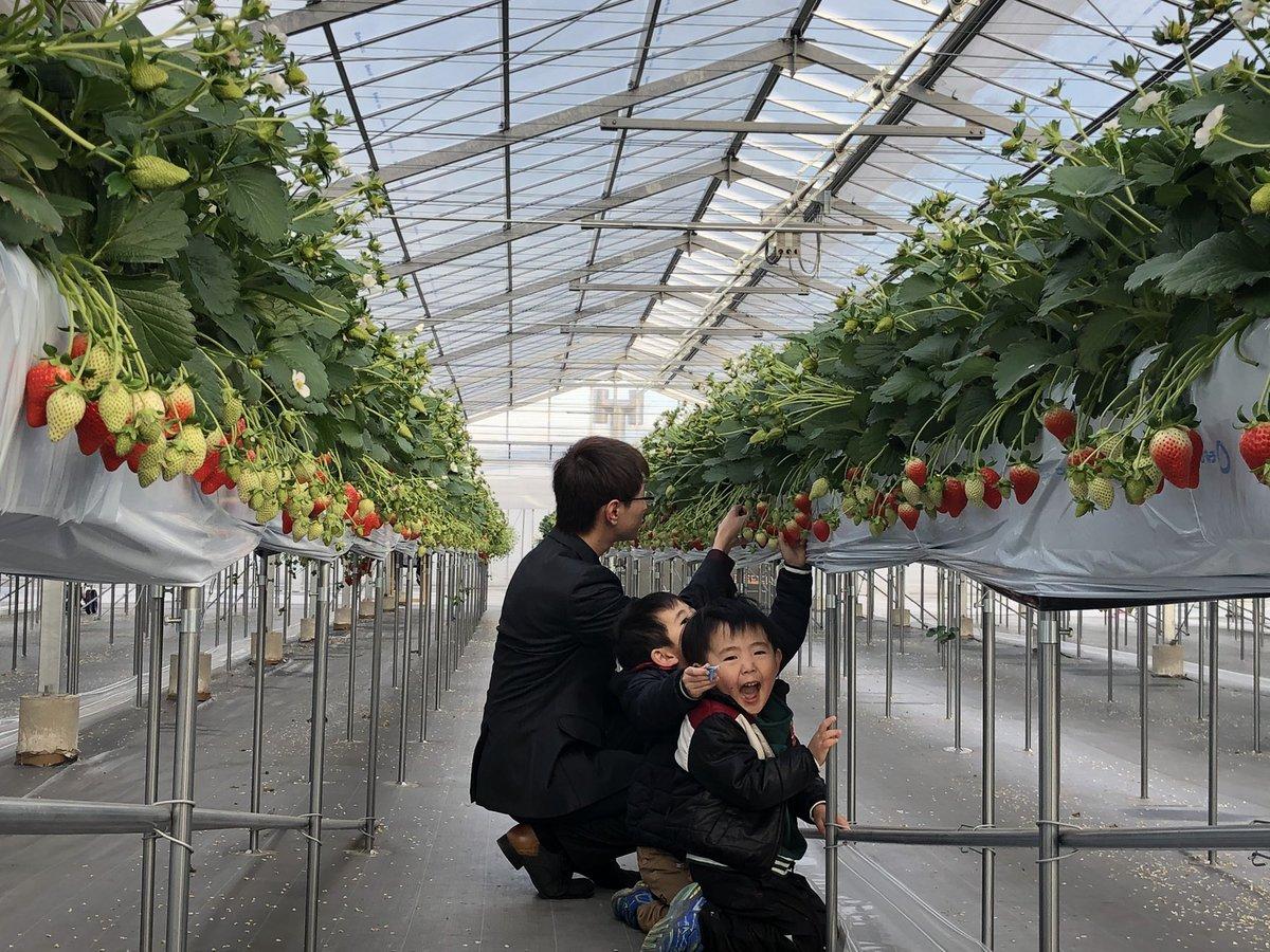 イチゴ 園 いわ れ
