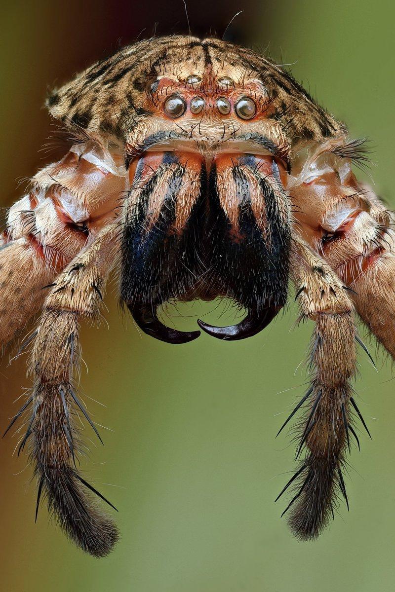 эти нормы фото австралийского паука по хорошему которое должно произойти